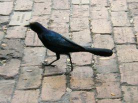Today's inlet: Blurry bird.