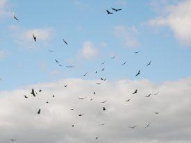Today's inlet: Bird crowd.