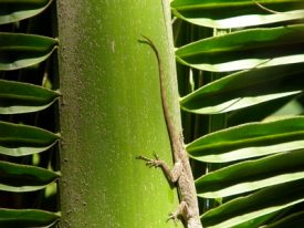 Today's inlet: Gecko 2.