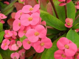 Today's inlet: Crown of Thorns.