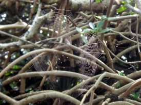 Today's inlet: Web.