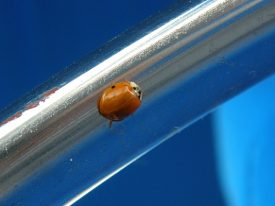 Today's inlet: Ladybug.