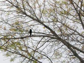 Today's inlet: Bird in tree.