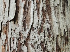 Today's inlet: Bark.