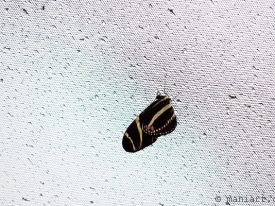 Today's inlet: Butterfly 3.