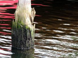 Today's inlet: Piling 2.