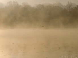 Today's inlet: Morning mist.