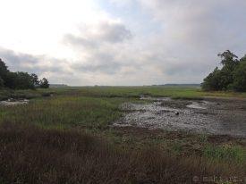 Wetlands 2.