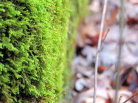 Winter moss.