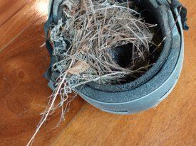 Helmet nest.