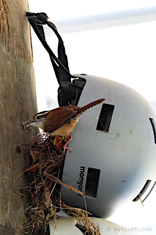 Bird safety.